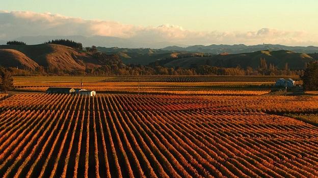 Autumn vines   copy %282%29