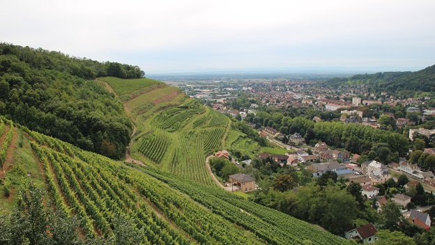 Overlooking the grand cru kitterl%c3%a9  schlumberger's vineyards  towards guebwiller