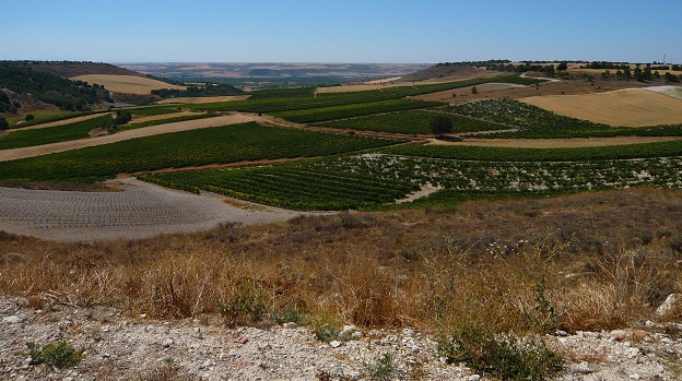 The view from atop emilio moro's malleolus vineyard in pesquera de duero