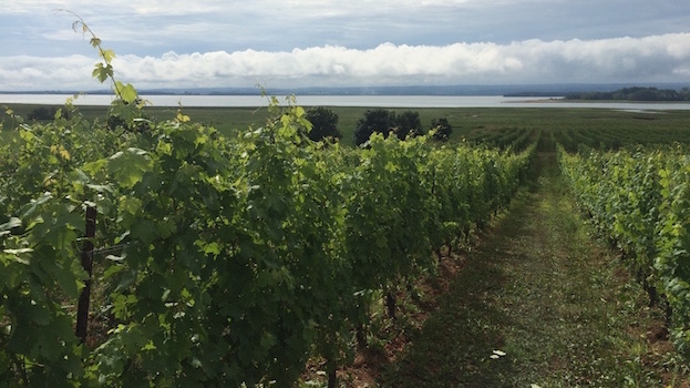 Vineyards at lightfoot   wolfville in the annapolis valley copy