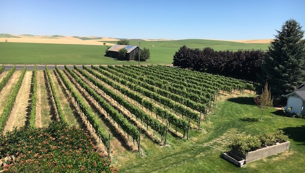 Abeja's mill creek estate vineyard  on the northeast side of walla walla copy