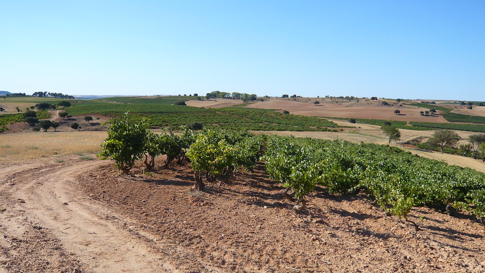 Late summer in ribera del duero copy
