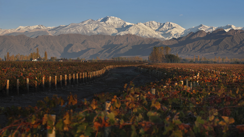 Vineyards in mendoza 1