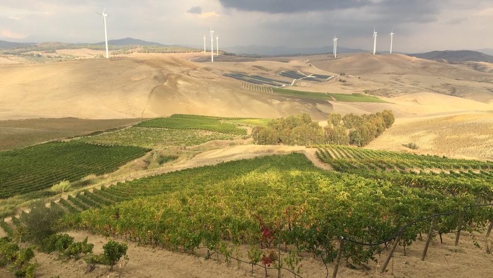 0 the vineyards at feudo montoni copy