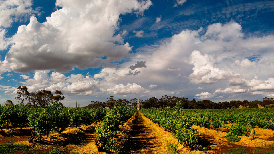 Henschke's famed hill of grace vineyard  the source of one os australia's most iconic wines