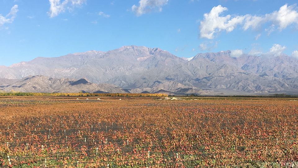 Early signs of autumn at the zuccardi winery in paraje altamira copy 2