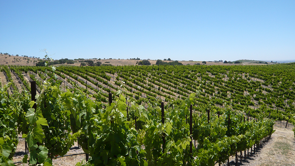 The mineral rich soils of the willow creek district produce wines of uncanny freshness for such a hot region copy
