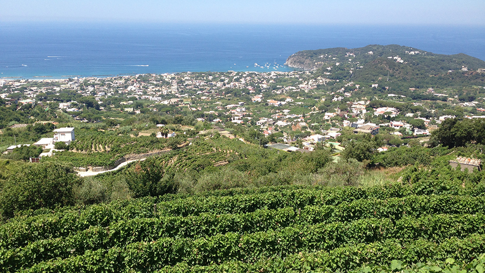 Typical coastline vineyards of campania cover