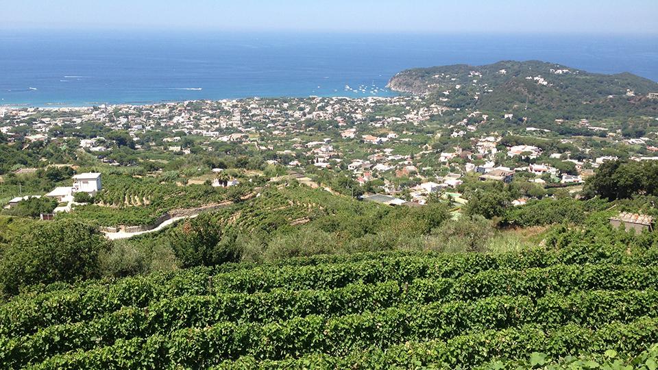 Typical coastline vineyards of campania cover