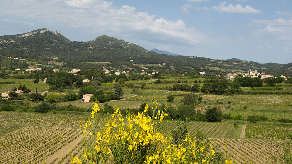 Late spring in the vacqueyras vineyards copy