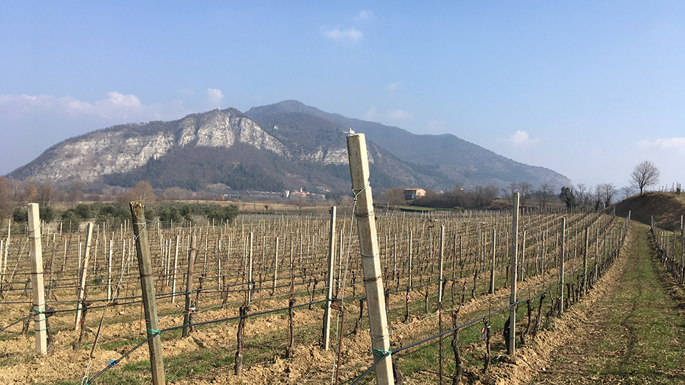 A view of franciacorta vines copy