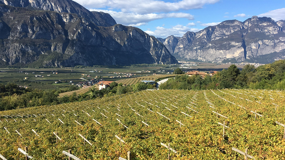 T a beautiful and typical panorama of vines in trentino copy