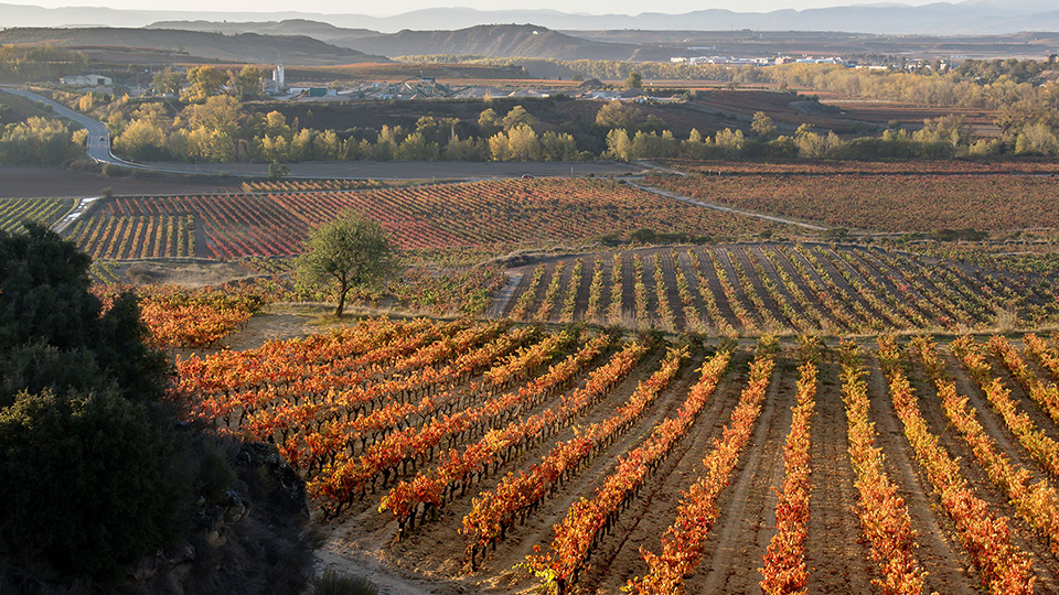 Rioja's beneficial microclimate owes a great deal to the sierra cantabria mountain range  which shelters the vineyards from rain and cold winds that pour down from the atlantic ocean copy