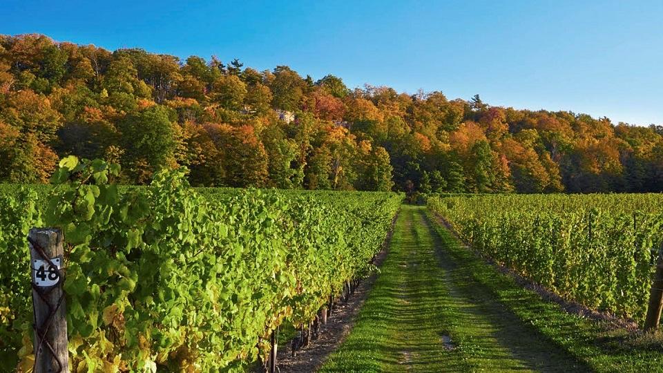 Th beautiful cave spring vineyard copy