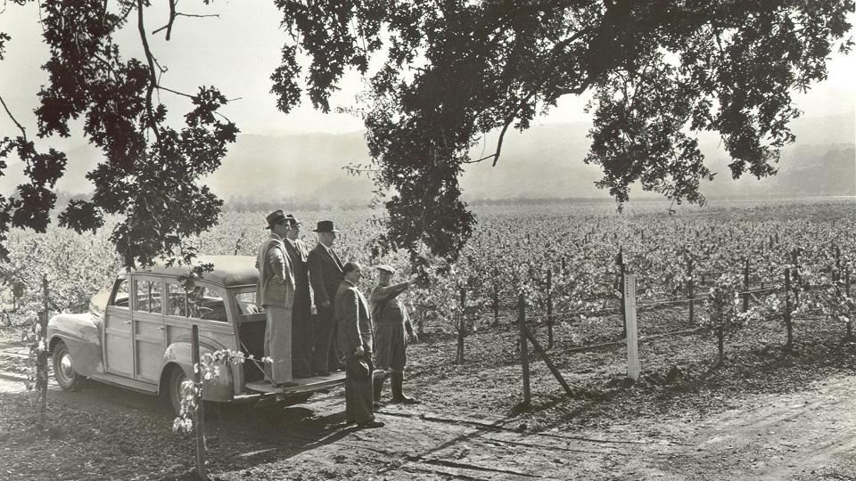 The bv  2 vineyard in 1939 copy2
