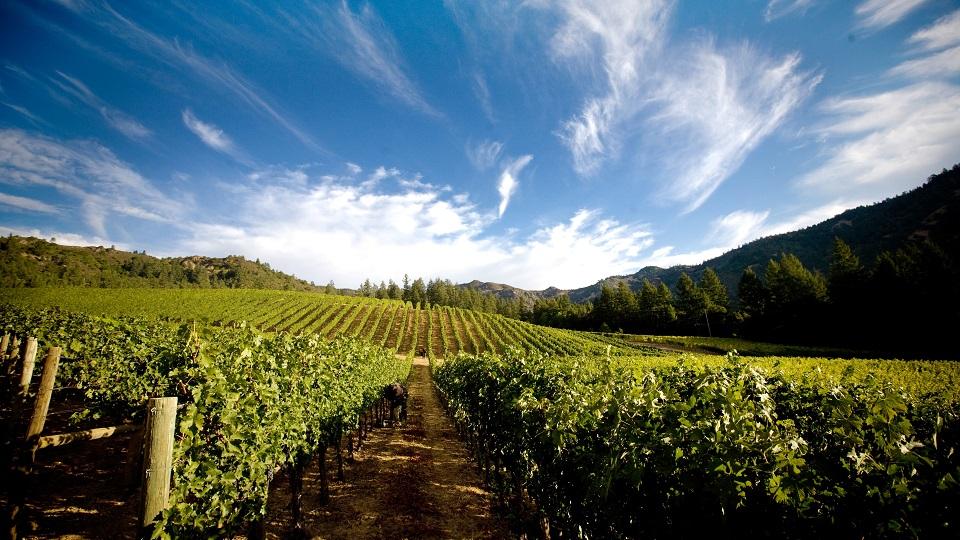 Heimark vineyard  a key component in the j. daniel cuv%c3%a9e copy