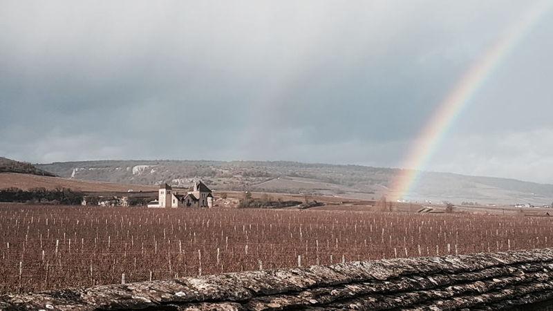 Clos vougeot rainbow