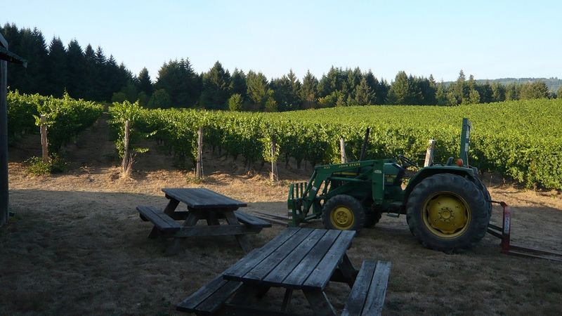 1 afternoon at brick house vineyard  one of the first in the united states to be farmed biodynamically copy