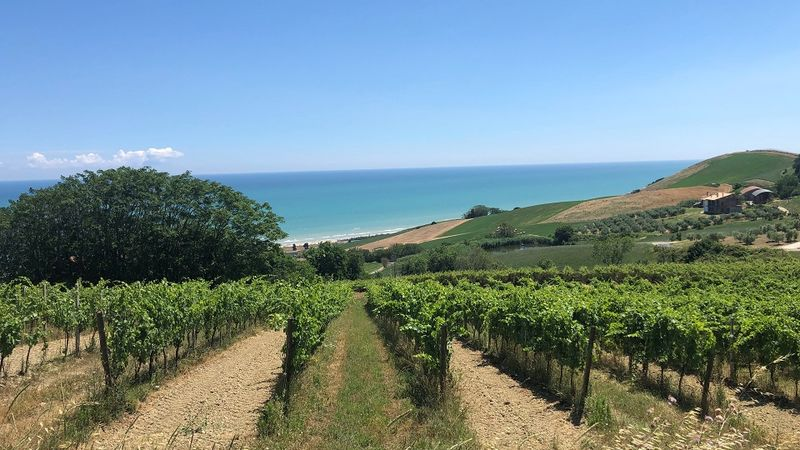 Abruzzo coastal vineyards copy