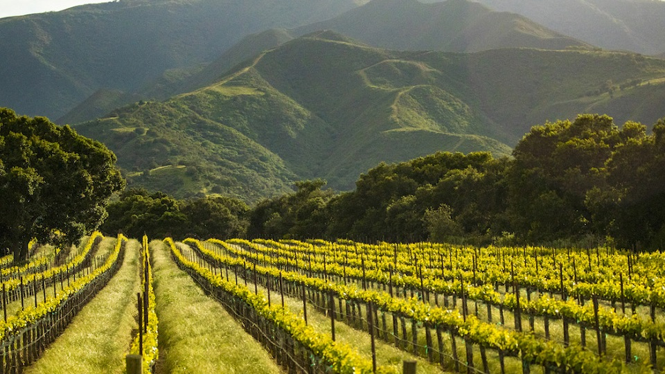 Soberanes vineyard copy