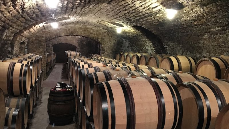 Nothing but oak in vincent dauvissat's cellar