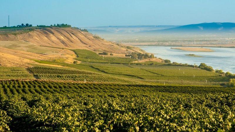 Sagemoor vineyard  overlooking the columbia river credit richard duval cover