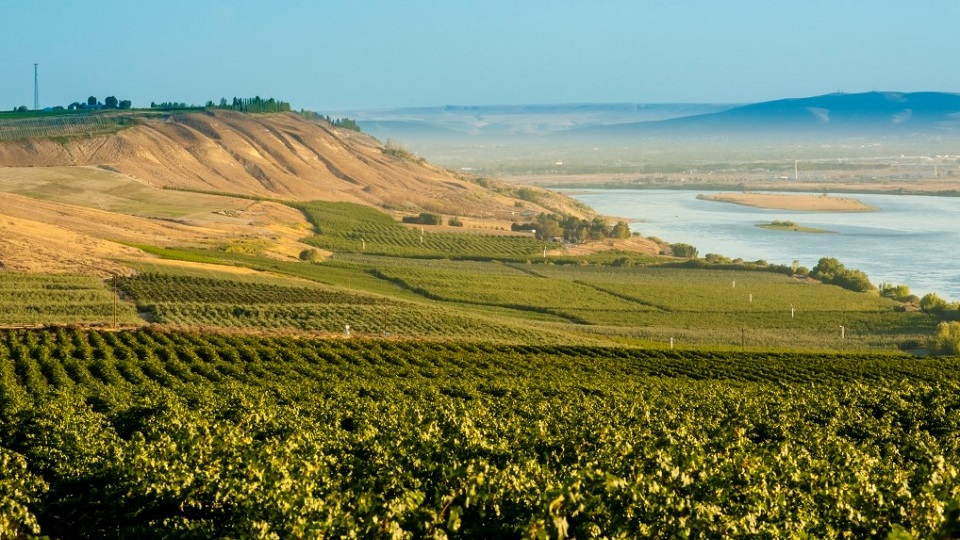 Sagemoor vineyard  overlooking the columbia river credit richard duval cover