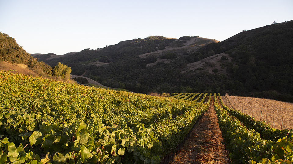 Blessed with a varying topography of rolling hills and varied exposures  san luis obispo produces a range of wine styles copy