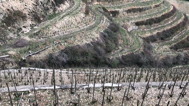 For centuries  the garnitic soils of the faned hermitage hill have produced some of the most compex  ageworthy wines in the world copy