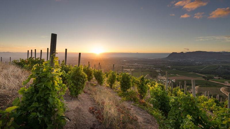 Klein constantia vineyard