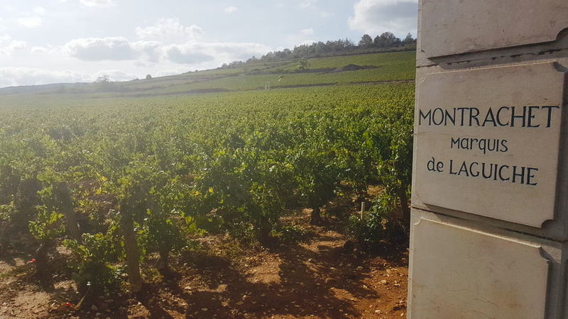 Dourhin montrachet vineyard