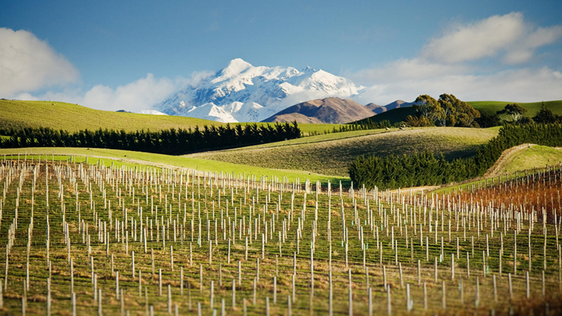 Marlborough is protected from rain and high winds by the surrounding hills and mountain ranges including the 2 885 metre tapuae o uenuku (often referred to as mount tappy by locals)