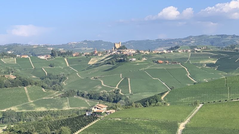 What makes a great barolo vintage cover