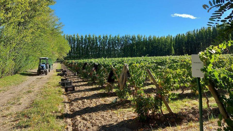 2021 argentina harvest report 2