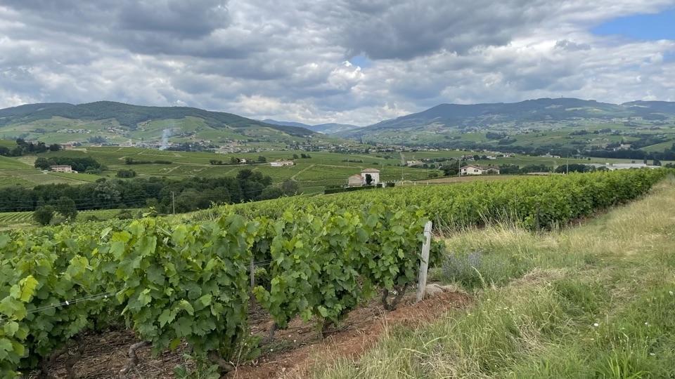 Beaujolais landscape copy